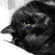 猫知恵 さんのプロフィール写真