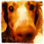 ニーナ さんのプロフィール写真