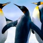セカンドペンギン さんのプロフィール写真