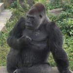 KAI さんのプロフィール写真