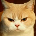 あーちゃん@猫好き さんのプロフィール写真